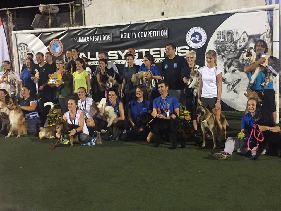 schnauzer_syros_agility